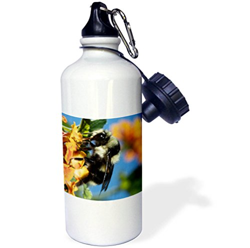 Flowers Feeding Bottle - 3dRose Danita Delimont - Insects - USA, California. Bumble bee feeding on flower. - 21 oz Sports Water Bottle (wb_278508_1)