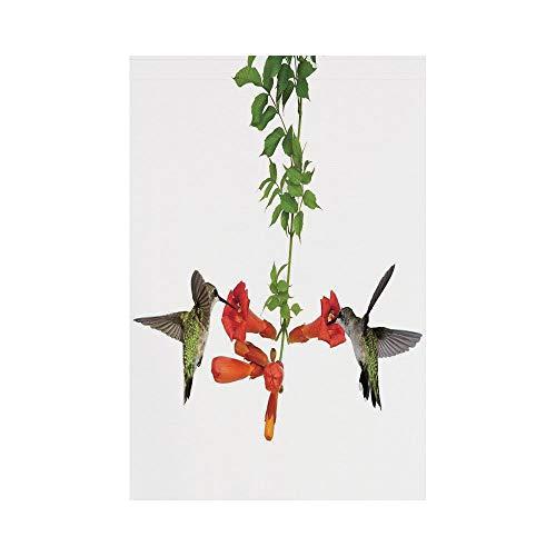 lsrIYzy Polyester Garden Flag Outdoor Flag House Flag Banner,Hummingbirds Decor,Two Hummingbirds Sip Nectar from a Trumpet Vine Blossoms Summertime,for Wedding Anniversary Home Outdoor Garden Decor]()