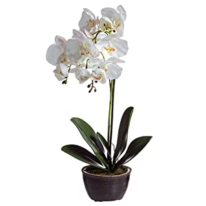 "20"" Silk Phalaenopsis Orchid Flower Arrangement w/Ceramic Pot -White/Pink (Pack of 4) 50"