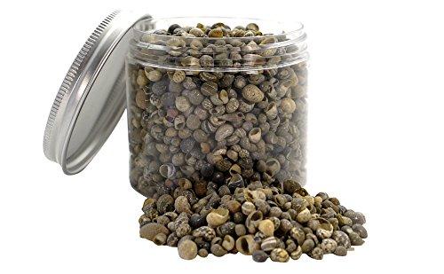 Desertcart Bahrain Seashell Supplies Philippines Buy Seashell