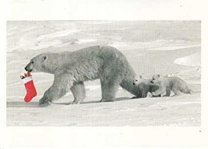 Amazon unused christmas card mother polar bear and cubs polar unused christmas card mother polar bear and cubs polar parade photo by daniel j cox m4hsunfo