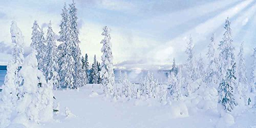 GladsBuy Snowy Forest 20' x 10' Computer Printed Photography Backdrop Snow Theme Background LMG-167 by GladsBuy
