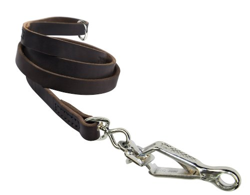 Dean & Tyler No Assumptions Dog Leash with Brown Stainless Steel Ring on Handle and Herm Sprenger Snap Hook, 6-Feet by 3/4-Inch by Dean & Tyler
