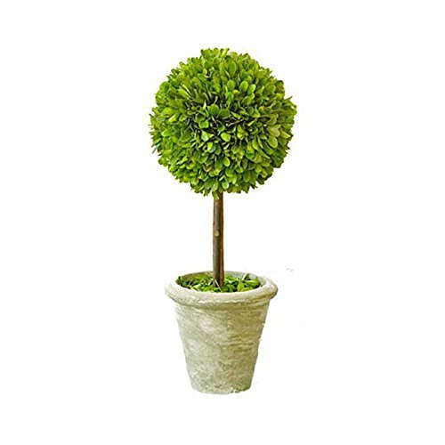 Flora Decor Preserved Boxwood Single Ball Topiary 12 Inch ()
