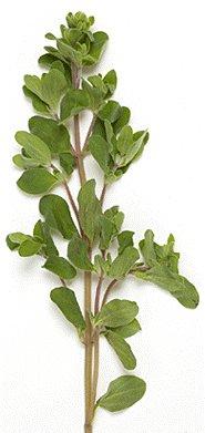 Marjoram Leaf Rubbed - Origanum Marjorana (454g = One Pound) Brand: Herbies Herbs