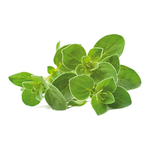 Click and Grow Smart Garden Oregano Plant Pods, 9-Pack