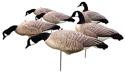 Full Body Canada Goose Decoys - 6 pack - Light Weight EVA - CHEAP! (Best Goose Decoys For The Money)