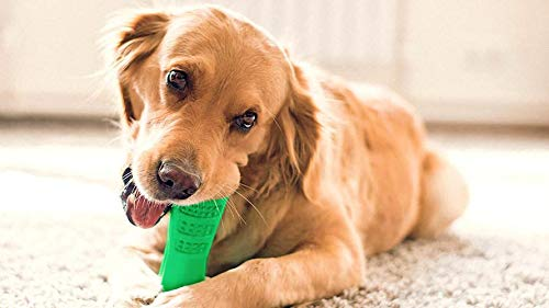 Sussie daddy Dog Tooth Brush Chewing Stick Tooth Brushing for Your Fur Baby