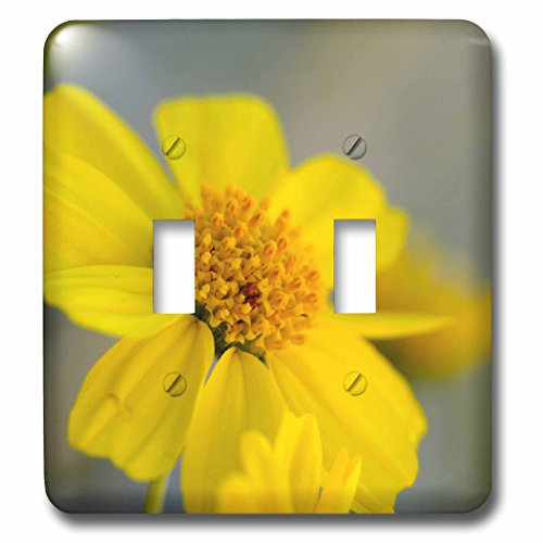 Danita Delimont - Plants - USA, California, Palm Springs, Indian Canyons. Desert Marigold flower - Light Switch Covers - double toggle switch - Outlets Springs Palm Desert