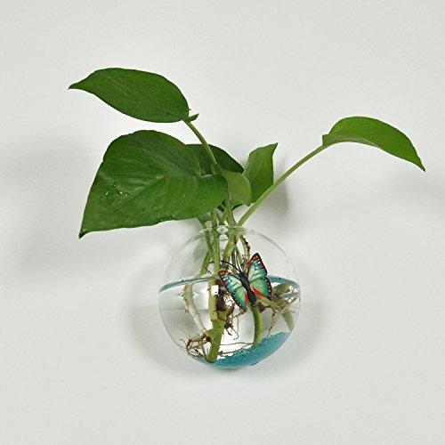 12cm Clear Ball Shape Glass Wall Hanging Flower Vase Plant Bottle Home Decor