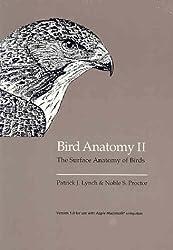 Bird Anatomy II: The Surface Anatomy of Birds