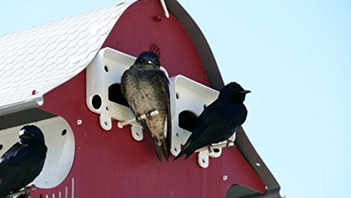 S & K Mfg. 16 Family Purple Martin Barn (Discontinued by Manufacturer)