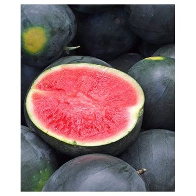50 Black Diamond Watermelon Seeds : Garden & Outdoor