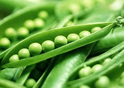 75+ Vegetable Garden Seeds - Pea -
