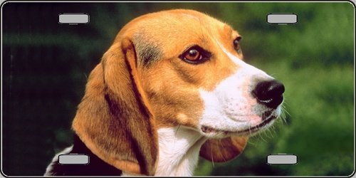 Beagle Dog Photograph Metal Novelty License Plate Tag Sign Smart Blonde LP-2157