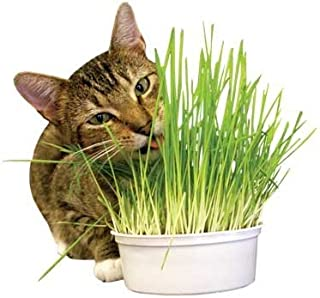 product image for Imperial Cat Easy Grow Oat Grass Kit