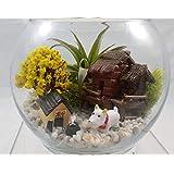 FARMERLY Las Semillas orgánicas: el Aire (Tillandsia Harrisii) Burbuja terrario de Cristal t - Happy Farm Vley
