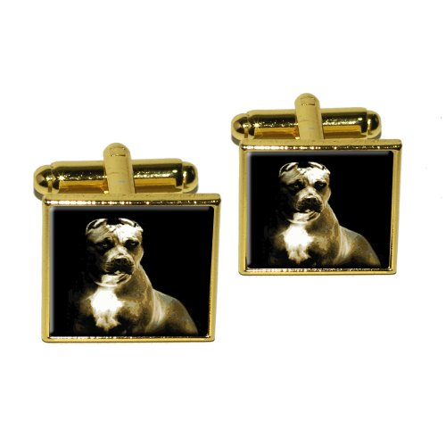 Graphics and More Pitbull Dog Square Cufflink Set - Gold