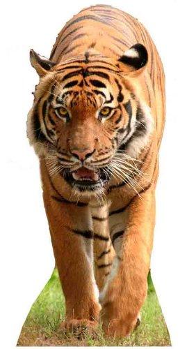 Tiger - Wildlife/Animal Lifesize Cardboard Cutout / Standee / Standup