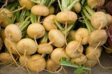 David's Garden Seeds Turnip Golden Ball D126TUR (Yellow) 1000 Heirloom Seeds