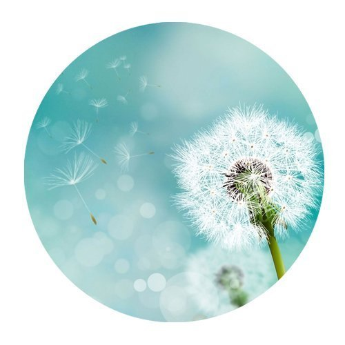 Pure White Dandelion And Flying Seed Personalized Round Mouse Pad