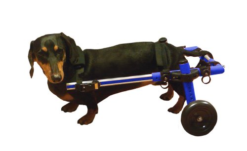 Walkin' Wheels Dog Wheelchair - for Small Dogs 11-17 lbs - Veterinarian Approved - Wheelchair for...
