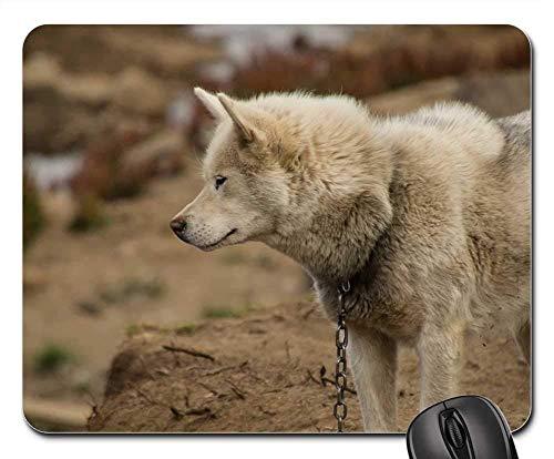 Gaming Mouse Pads,Mouse mat,Dog Sled Dog Greenland Summer Animal Greenland Dog
