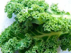 Kale Dwarf Siberian Improved Great Heirloom Vegetable By Seed Kingdom BULK 1 OZ ()