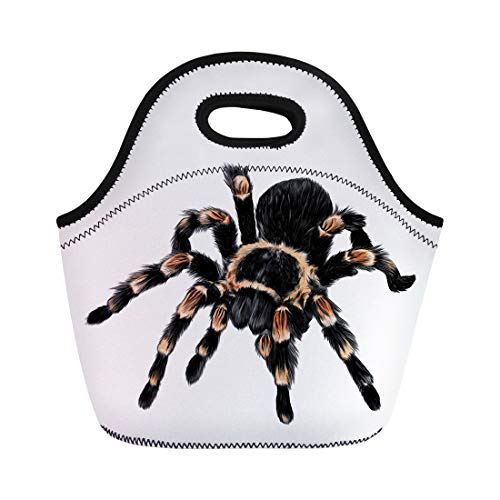 Semtomn Neoprene Lunch Tote Bag Brown Activity Spider Tarantula Color Drawing Orange Africa African Reusable Cooler Bags Insulated Thermal Picnic Handbag for Travel,School,Outdoors, Work