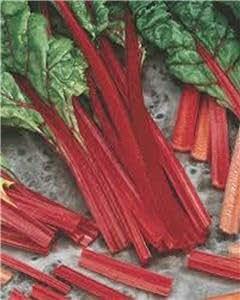 Acelgas, rojo rubí SWISS SEMILLAS Chard, orgánico, no-GMO, 25 semillas por