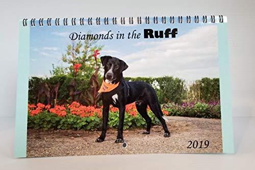 2019 Diamonds in the Ruff Rescue -