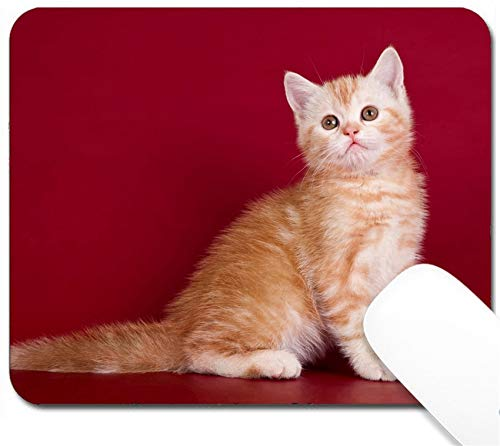 MSD Mouse Pad with Design - Non-Slip Gaming Mouse Pad - Image ID 19392036 Little Kitty on red Background