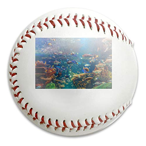 Whages Red Yellow Tropical Fishes in Colorful Underwater World with Coral Reef Customized Soft Baseball Bubble Baseball is Suitable for Children and Teen Players Training Batting ()