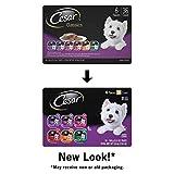 Cesar Gourmet Wet Dog Food Variety Packs – 36 Trays
