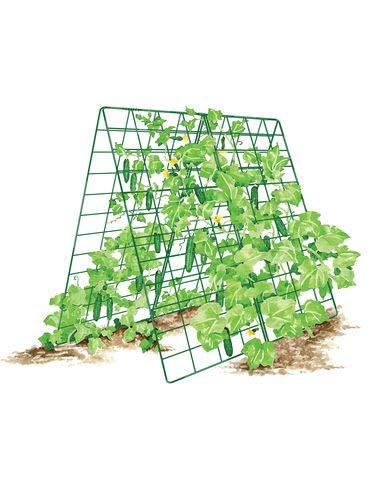 - Gardener's Supply Company Deluxe Cucumber Trellis