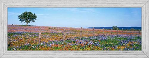 Easy Art Prints Panoramic Images's 'Flowers in a Field, Texas Hill Country, Texas, USA' Premium Framed Canvas Art - 30
