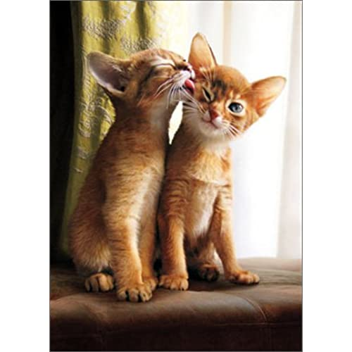 Kitten Licks Kitten Funny Cat Valentine's Day Card Sales