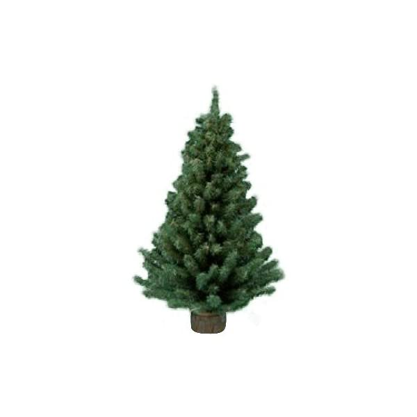 Kurt-Adler-24-Mini-Pine-Christmas-Tree