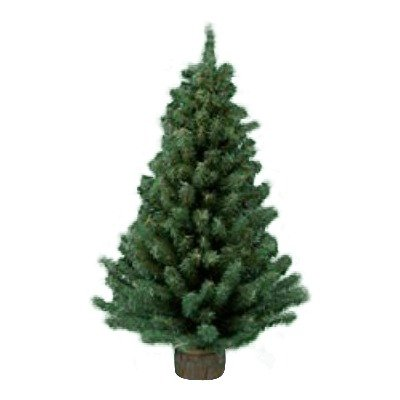 Kurt Adler 12 Miniature Pine Tree by Kurt (Miniature Christmas Tree)