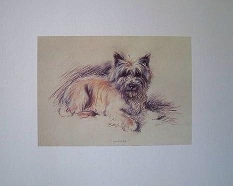 Sconosciuto Juego de 4 Fantásticos Perro Dibujo de Lucy Dawson (Impresiones) tamaño 39 x 30 cm Cada: Amazon.es: Hogar