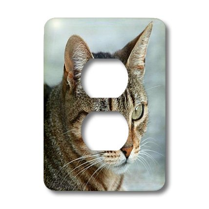 - 3dRose lsp_16934_6 Tabby Cat Portrait 2 Plug Outlet Cover
