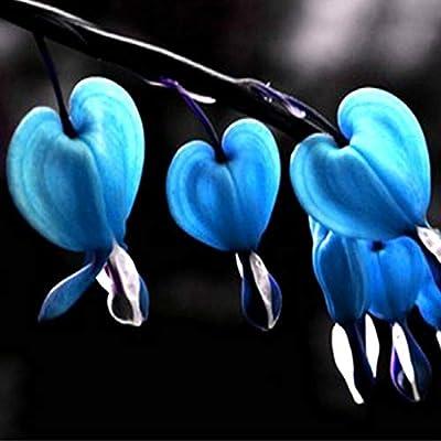 hfjeigbeujfg Garden Seeds, 10Pcs Perennial Herbs Dicentra Spectabilis Flower Plant Bleeding Heart Seeds - Dicentra Spectabilis Seeds : Garden & Outdoor