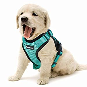 Rabbitgoo Cat Harness Escape Proof Small Dog Vest Harnesses, Adjustable Soft Mesh Kitty Harness for All Weather Walking… Click on image for further info.