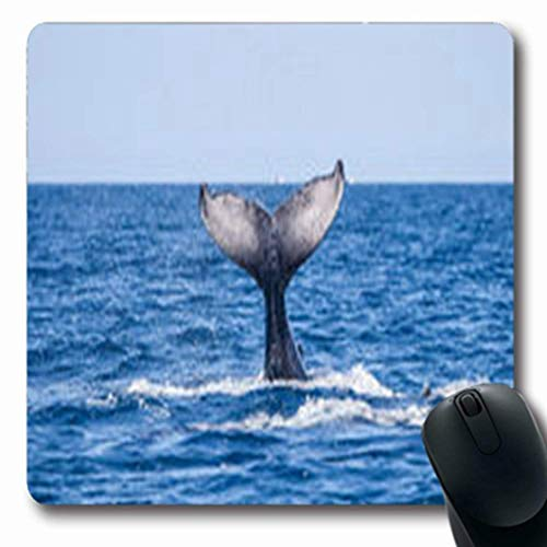 Mousepads Young Humpback Whale Megaptera Joy Novaeangliae Waves Wildlife Nature Diving Oblong Gaming Mouse Pad Non-Slip Rubber -
