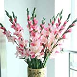 (20)Gladiolus Bulbs of Pink, A Variety of Colors You can Choose, Fast Delivery and Very Good Quality, Easy to Grow Flower Flower Bulbs Easy to Grow Environmentally Friendly Plants Home Garden