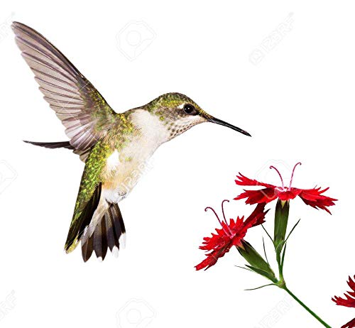 Butterfly and Hummingbird Attracting Wildflower Seeds - .3 Oz - Approximately 5,000 Seeds