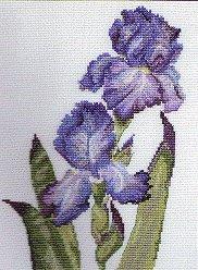 Purple Iris Cross Stitch kit DMC K5472