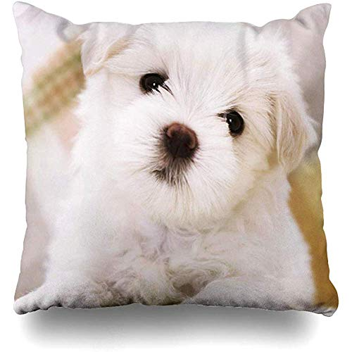 Throw Pillow Covers Custom Characteristic Animals Maltese Dogs Outdoor Square Size 18 x 18 Inches Cushion Cases Home Pillowcases
