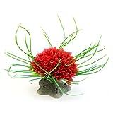 Muranba Aquarium ModelingLandscaping Plants Ornamental Aquatic Plastic Multicolored Ball (Red)