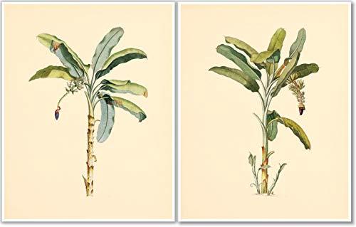 Palm Trees Wall Art - Vintage Botanical Prints- Set of 2-11x14 - Nature Decor - Unframed (Antique Palm Frame Art Print)